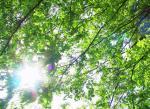 ゆんフリー写真素材集 木漏れ日の5月