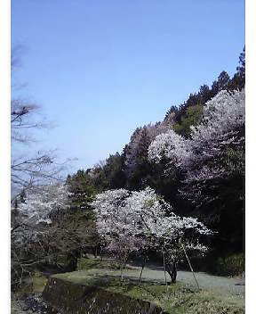 霞間ヶ渓6