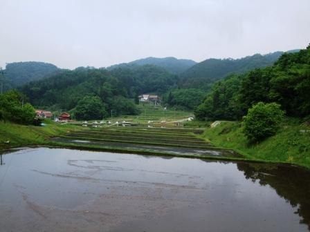 酒米田植え-10