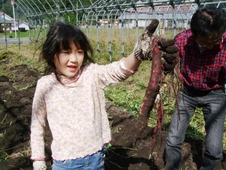 芋掘り体験-09