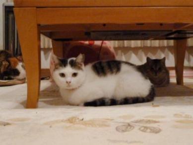 美猫のマコ