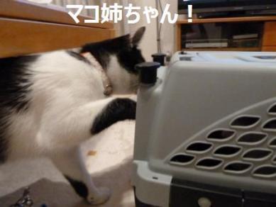 マコ姉ちゃん