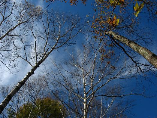 木立の向こうの秋の空