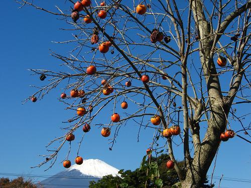 富士山と柿