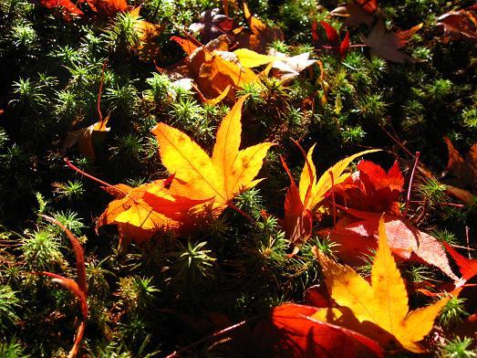詩仙堂にて 散り紅葉