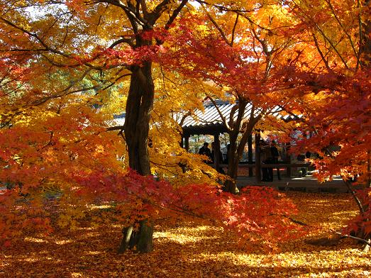 2008秋・京都の紅葉