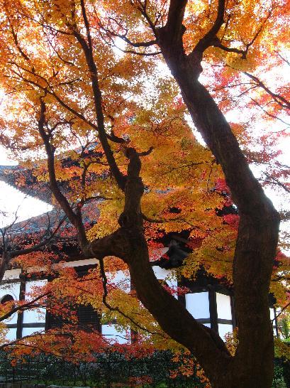 東福寺 経蔵