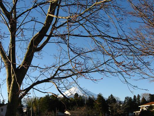 冬晴れに富士