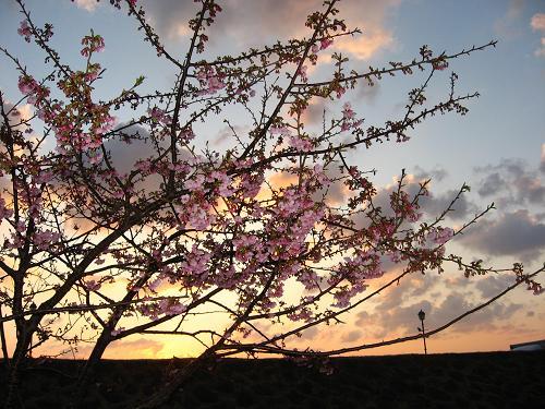 日本の夜明けは下田から