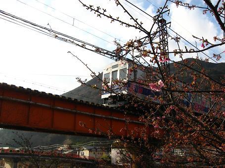 桜と伊豆急
