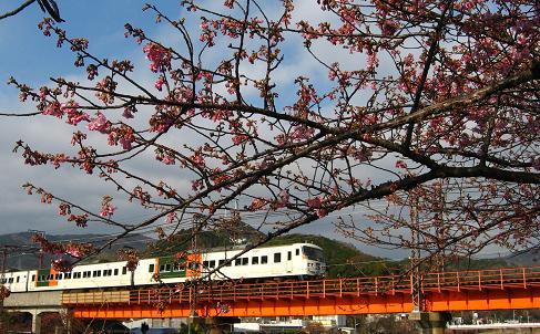 桜と伊豆急 2