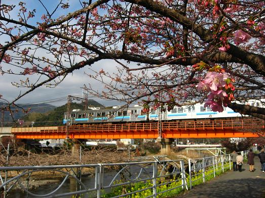 桜と伊豆急 3