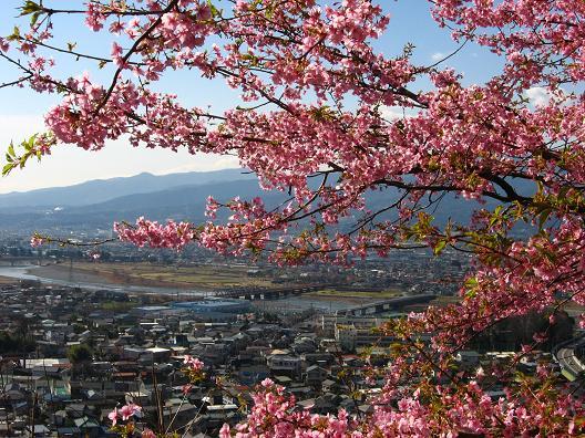 松田山からの眺め