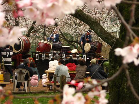 桜広場にて