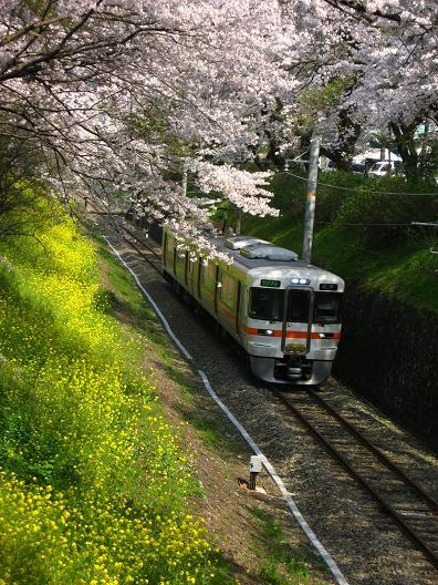 2009年 山北の桜