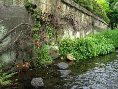 源兵衛川にて 2