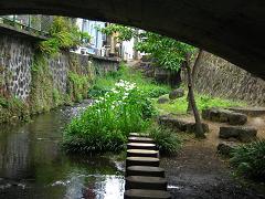 源兵衛川にて 3