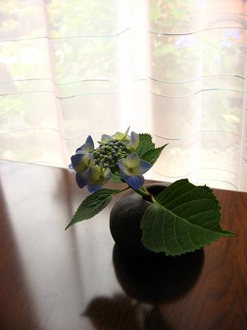 姫1の紫陽花