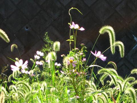 朝陽を浴びた野の花
