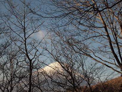 樹林から見える富士山