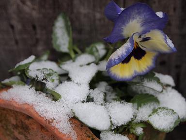うっすらと積もった雪