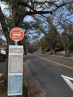 伊豆高原の桜並木道 桜が咲けば・・・
