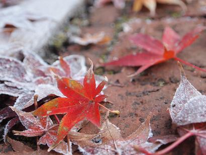 霜の上に散りゆく紅葉