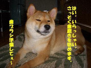 CIMG.jpg