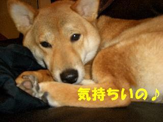 CIMG4886.jpg