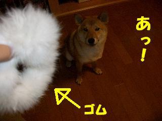 CIMG4895.jpg