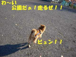 CIMG5276.jpg