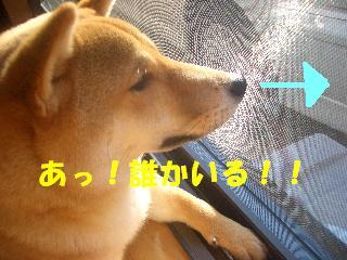 CIMG5699.jpg