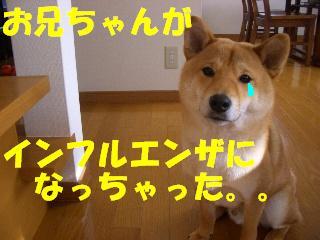 CIMG6275.jpg