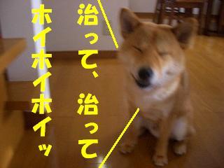 CIMG6276.jpg
