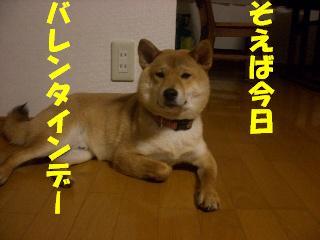 CIMG6442.jpg