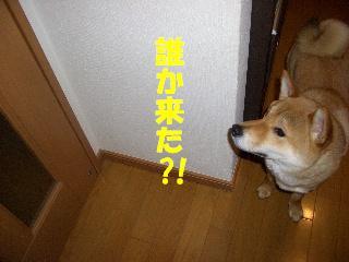CIMG6619.jpg