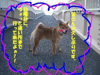 CIMG6717.jpg