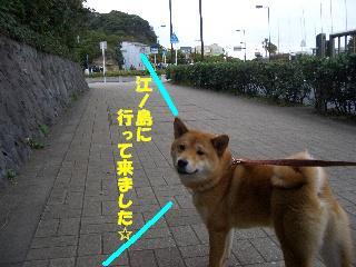 CIMG6863.jpg