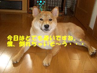 CIMG7542.jpg