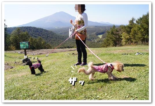 201110015yuzukosyo5.jpg