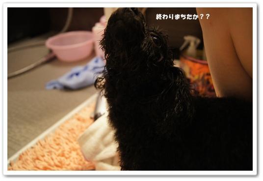 20111002kosyo1.jpg