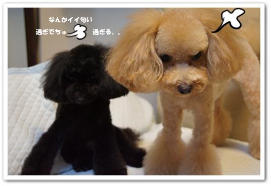 20111004yuzukosyo4.jpg