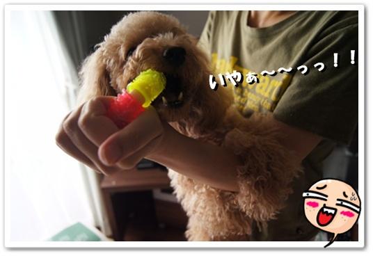 20111006yuzu1.jpg