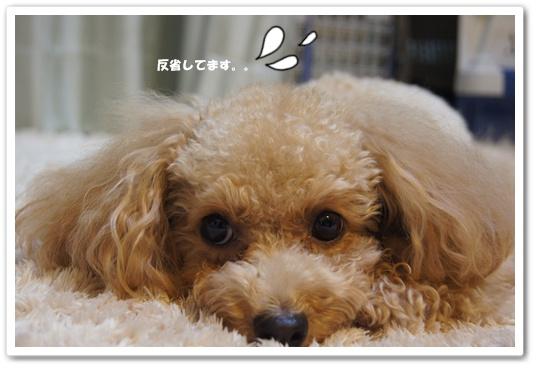 20111007yuzu1.jpg