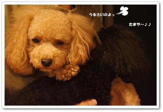20111009yuzukosyo5.jpg