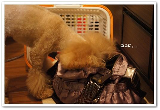20111011yuzu1.jpg
