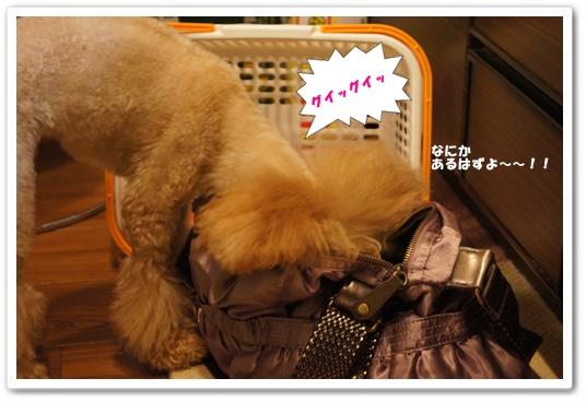 20111011yuzu2.jpg