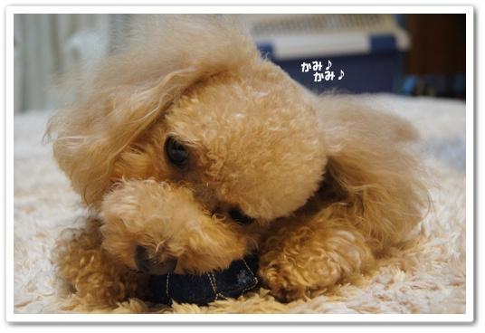 20111011yuzu5.jpg
