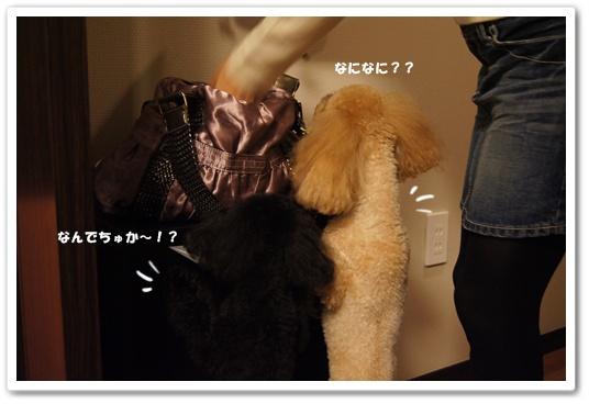 20111011yuzukosyo1.jpg