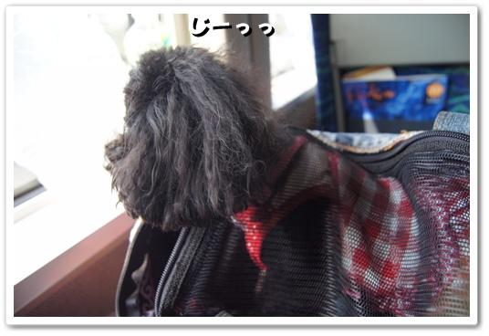 20111013kosyo1.jpg